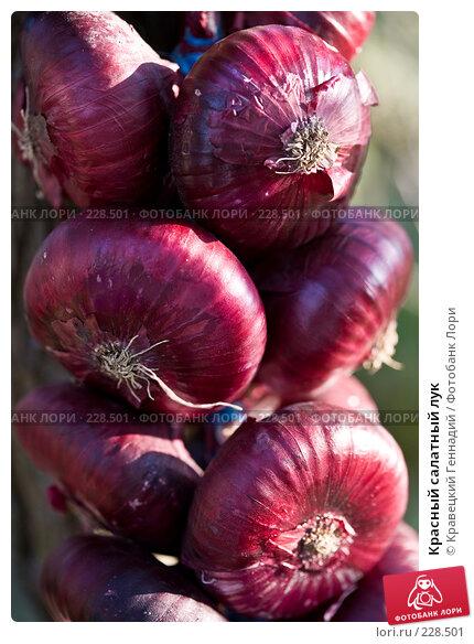 Купить «Красный салатный лук», фото № 228501, снято 4 августа 2006 г. (c) Кравецкий Геннадий / Фотобанк Лори