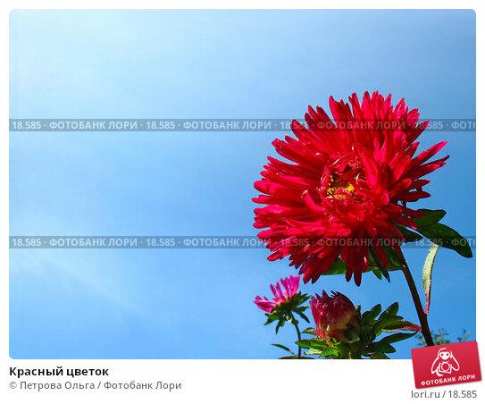 Красный цветок, фото № 18585, снято 25 августа 2006 г. (c) Петрова Ольга / Фотобанк Лори