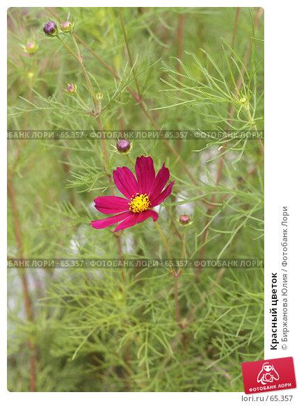 Красный цветок, фото № 65357, снято 22 июля 2007 г. (c) Биржанова Юлия / Фотобанк Лори