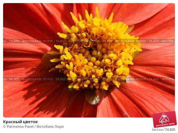 Красный цветок, фото № 74805, снято 18 августа 2007 г. (c) Parmenov Pavel / Фотобанк Лори