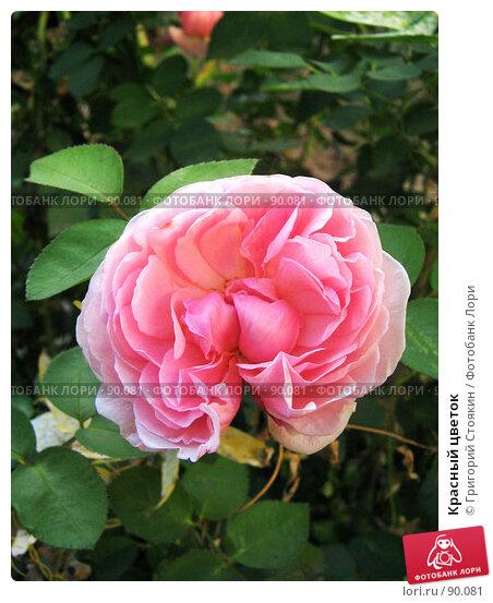 Красный цветок, фото № 90081, снято 29 сентября 2007 г. (c) Григорий Стоякин / Фотобанк Лори