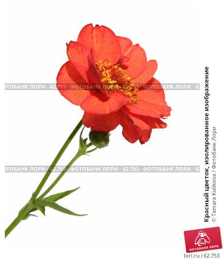 Красный цветок, изолированное изображение, фото № 62753, снято 8 июля 2007 г. (c) Tamara Kulikova / Фотобанк Лори