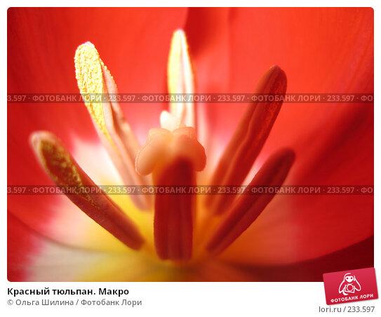 Красный тюльпан. Макро, фото № 233597, снято 10 декабря 2016 г. (c) Ольга Шилина / Фотобанк Лори