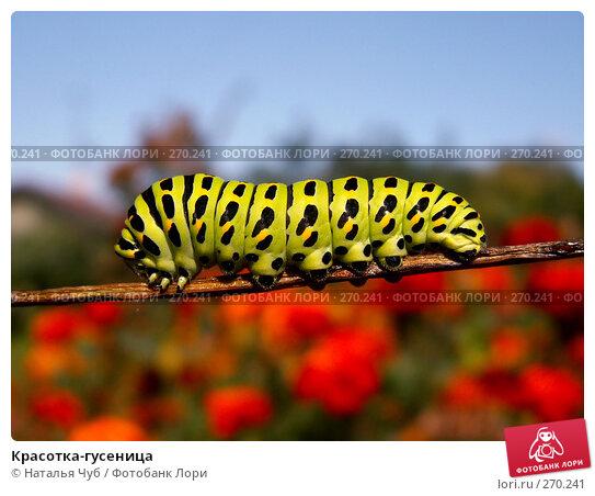 Купить «Красотка-гусеница», фото № 270241, снято 25 сентября 2005 г. (c) Наталья Чуб / Фотобанк Лори