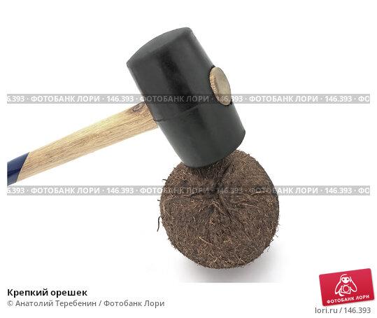 Купить «Крепкий орешек», фото № 146393, снято 8 декабря 2007 г. (c) Анатолий Теребенин / Фотобанк Лори