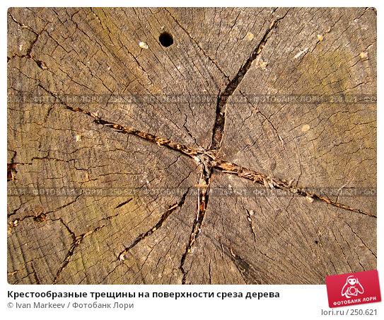 Крестообразные трещины на поверхности среза дерева, фото № 250621, снято 28 марта 2017 г. (c) Василий Каргандюм / Фотобанк Лори