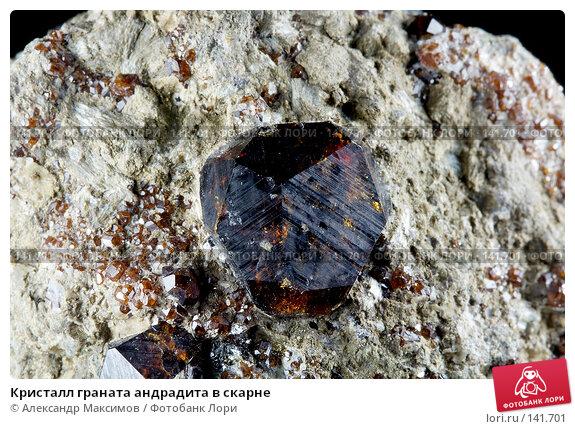 Кристалл граната андрадита в скарне, фото № 141701, снято 25 ноября 2006 г. (c) Александр Максимов / Фотобанк Лори
