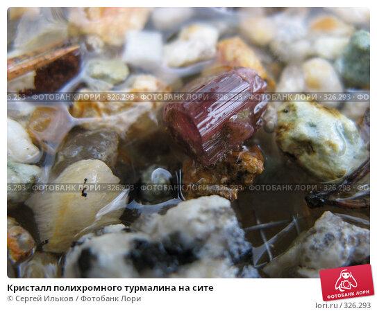 Кристалл полихромного турмалина на сите, фото № 326293, снято 12 июня 2008 г. (c) Сергей Ильков / Фотобанк Лори