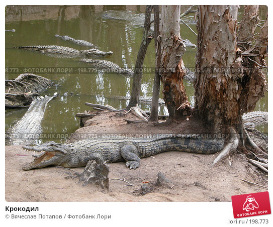 Крокодил, фото № 198773, снято 19 октября 2006 г. (c) Вячеслав Потапов / Фотобанк Лори