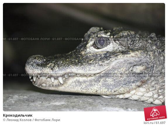 Купить «Крокодильчик», фото № 61697, снято 20 апреля 2018 г. (c) Леонид Козлов / Фотобанк Лори