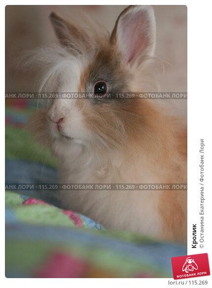 Кролик, фото № 115269, снято 29 сентября 2006 г. (c) Останина Екатерина / Фотобанк Лори
