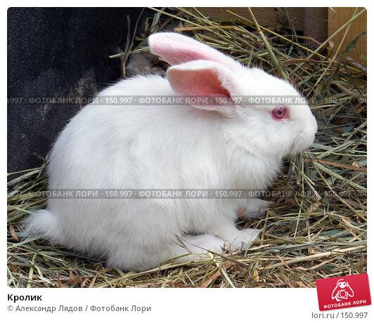 Кролик, фото № 150997, снято 26 мая 2007 г. (c) Александр Лядов / Фотобанк Лори