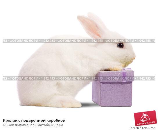 Кролик с подарочной коробкой. Стоковое фото, фотограф Яков Филимонов / Фотобанк Лори