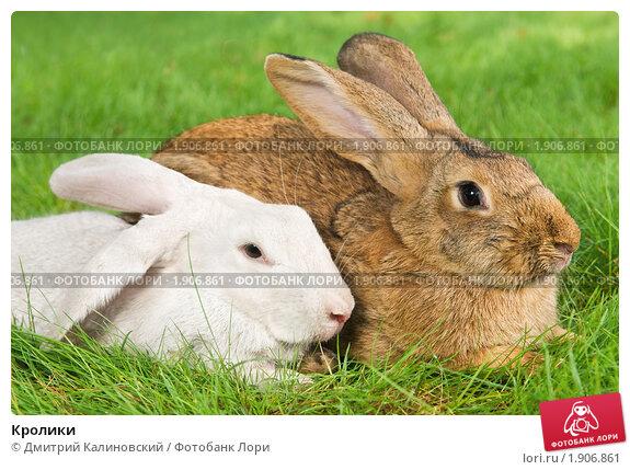 Кролики. Стоковое фото, фотограф Дмитрий Калиновский / Фотобанк Лори