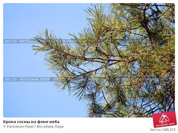 Крона сосны на фоне неба, фото № 240213, снято 30 марта 2008 г. (c) Parmenov Pavel / Фотобанк Лори