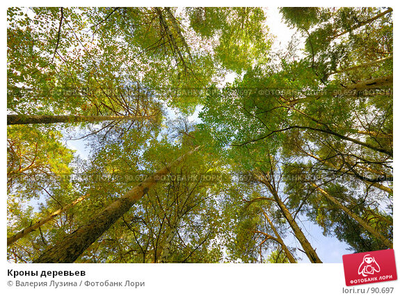 Кроны деревьев, фото № 90697, снято 22 сентября 2007 г. (c) Валерия Потапова / Фотобанк Лори