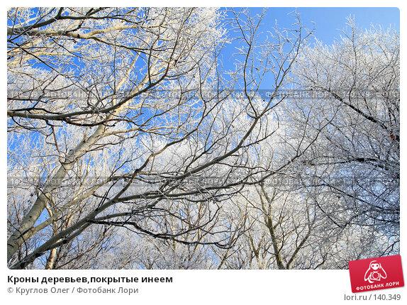 Кроны деревьев,покрытые инеем, фото № 140349, снято 5 декабря 2007 г. (c) Круглов Олег / Фотобанк Лори