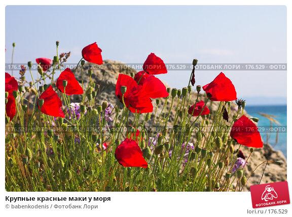 Крупные красные маки у моря, фото № 176529, снято 8 мая 2006 г. (c) Бабенко Денис Юрьевич / Фотобанк Лори