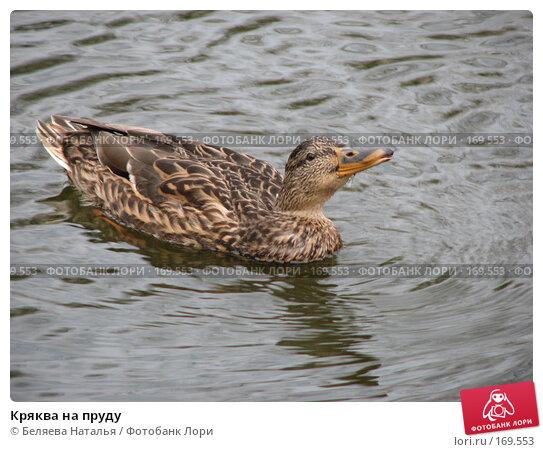 Кряква на пруду, фото № 169553, снято 8 октября 2007 г. (c) Беляева Наталья / Фотобанк Лори