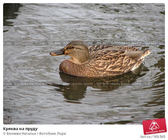 Кряква на пруду, фото № 169565, снято 20 октября 2007 г. (c) Беляева Наталья / Фотобанк Лори