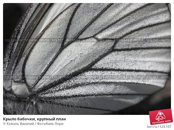 Купить «Крыло бабочки, крупный план», фото № 123157, снято 16 декабря 2017 г. (c) Коваль Василий / Фотобанк Лори