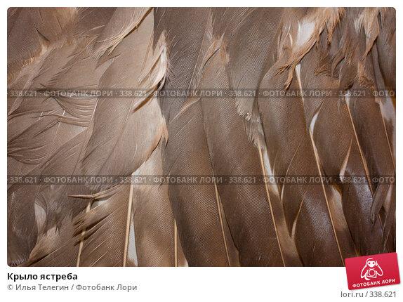 Крыло ястреба, фото № 338621, снято 26 июня 2008 г. (c) Илья Телегин / Фотобанк Лори