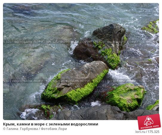 Крым, камни в море с зелеными водорослями, фото № 175325, снято 17 июня 2005 г. (c) Галина  Горбунова / Фотобанк Лори
