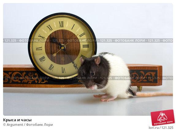 Крыса и часы, фото № 121325, снято 18 ноября 2007 г. (c) Argument / Фотобанк Лори