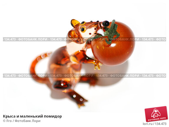 Купить «Крыса и маленький помидор», фото № 134473, снято 30 ноября 2007 г. (c) Fro / Фотобанк Лори