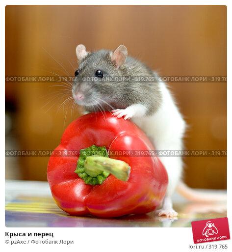 Крыса и перец, фото № 319765, снято 27 августа 2007 г. (c) pzAxe / Фотобанк Лори