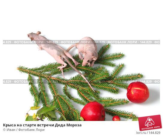 Крыса на старте встречи Деда Мороза, фото № 144829, снято 23 сентября 2007 г. (c) Иван / Фотобанк Лори