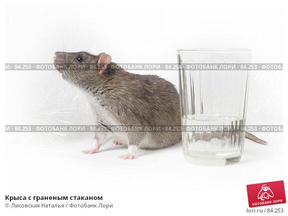 Крыса с граненым стаканом, фото № 84253, снято 15 сентября 2007 г. (c) Лисовская Наталья / Фотобанк Лори
