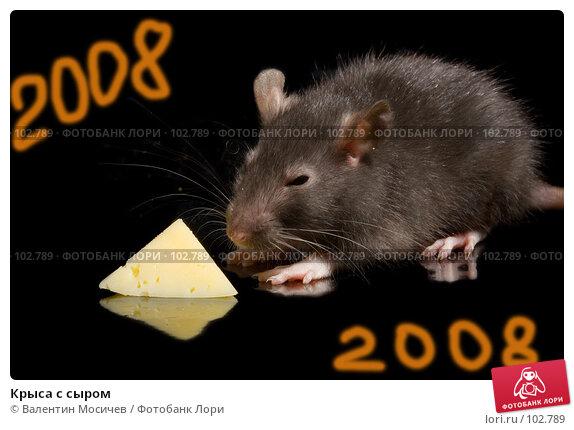Крыса с сыром, фото № 102789, снято 1 мая 2017 г. (c) Валентин Мосичев / Фотобанк Лори