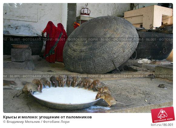 Крысы и молоко: угощение от паломников, фото № 86001, снято 3 марта 2004 г. (c) Владимир Мельник / Фотобанк Лори