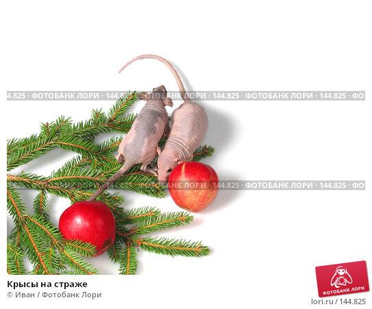 Крысы на страже, фото № 144825, снято 23 сентября 2007 г. (c) Иван / Фотобанк Лори