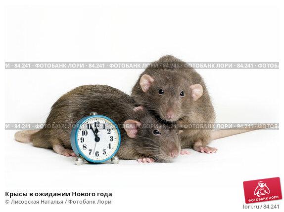 Крысы в ожидании Нового года, фото № 84241, снято 15 сентября 2007 г. (c) Лисовская Наталья / Фотобанк Лори