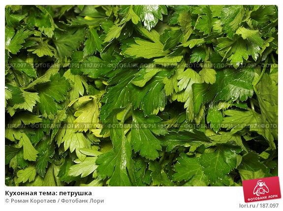 Кухонная тема: петрушка, фото № 187097, снято 30 декабря 2007 г. (c) Роман Коротаев / Фотобанк Лори