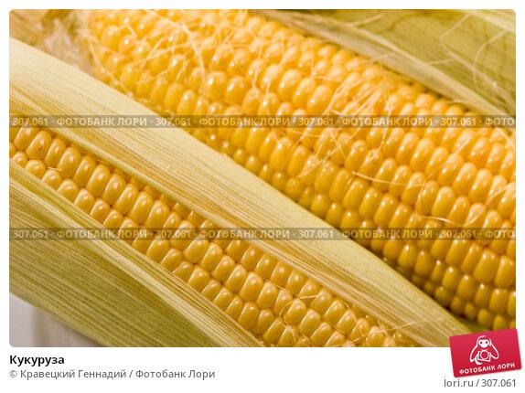 Кукуруза, фото № 307061, снято 9 октября 2005 г. (c) Кравецкий Геннадий / Фотобанк Лори