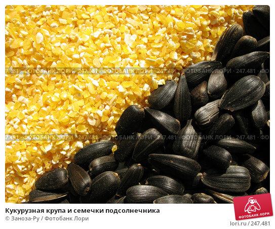 Кукурузная крупа и семечки подсолнечника, фото № 247481, снято 31 марта 2008 г. (c) Заноза-Ру / Фотобанк Лори