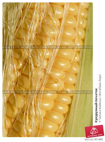 Кукурузный початок, фото № 67445, снято 31 июля 2007 г. (c) Tamara Kulikova / Фотобанк Лори