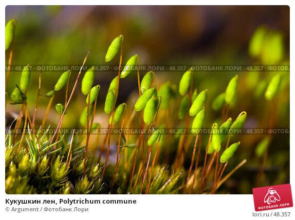 Кукушкин лен, Polytrichum commune, фото № 48357, снято 2 мая 2007 г. (c) Argument / Фотобанк Лори