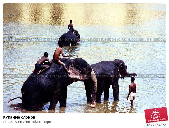 Купить «Купание слонов», эксклюзивное фото № 153185, снято 25 ноября 2017 г. (c) Free Wind / Фотобанк Лори