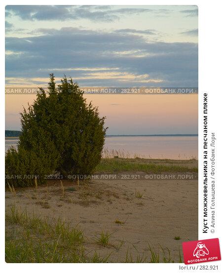 Куст можжевельника на песчаном пляже, эксклюзивное фото № 282921, снято 10 мая 2008 г. (c) Алина Голышева / Фотобанк Лори