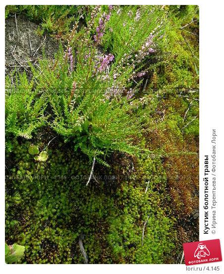 Кустик болотной травы, эксклюзивное фото № 4145, снято 21 августа 2004 г. (c) Ирина Терентьева / Фотобанк Лори
