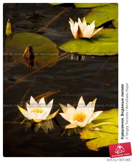 Купить «Кувшинки. Водяные лилии», фото № 307365, снято 28 июля 2004 г. (c) Sergey Toronto / Фотобанк Лори