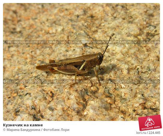 Купить «Кузнечик на камне», фото № 224445, снято 17 октября 2004 г. (c) Марина Бандуркина / Фотобанк Лори
