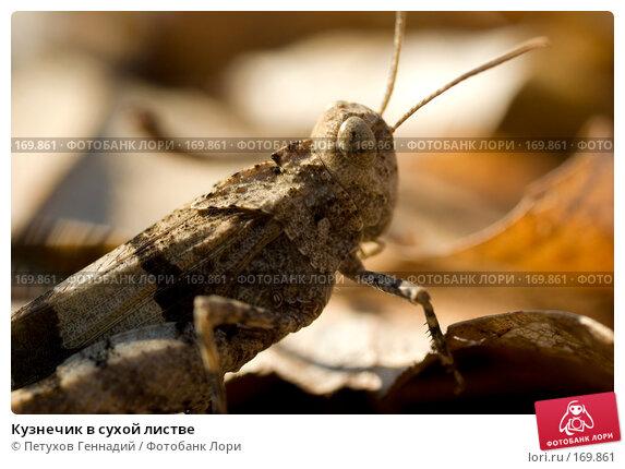 Кузнечик в сухой листве, фото № 169861, снято 12 августа 2007 г. (c) Петухов Геннадий / Фотобанк Лори