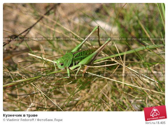 Купить «Кузнечик в траве», фото № 8405, снято 26 августа 2005 г. (c) Vladimir Fedoroff / Фотобанк Лори