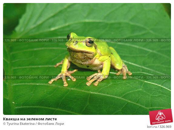 Квакша на зеленом листе, фото № 326969, снято 10 июня 2008 г. (c) Tyurina Ekaterina / Фотобанк Лори