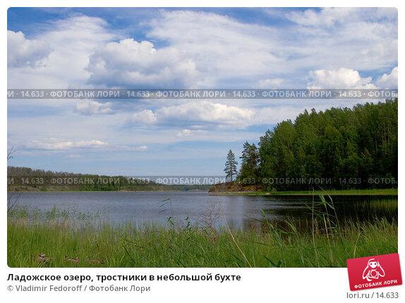 Ладожское озеро, тростники в небольшой бухте, фото № 14633, снято 4 июля 2006 г. (c) Vladimir Fedoroff / Фотобанк Лори